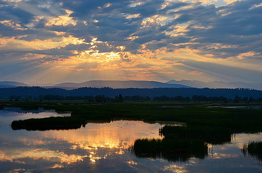 Wetlands Dawn by Annie Pflueger