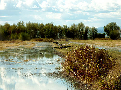 Wetlands by Pamela Patch