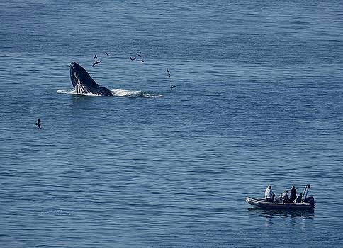 Whales and Watchers I by Jan Moore