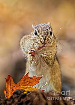 What Peanut by Barbara McMahon