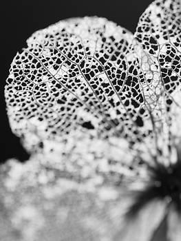 What Winter Left Behind by Jessica Myscofski