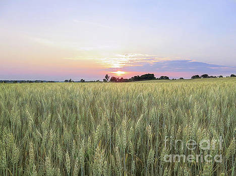 Wheat Field Sunset by Marion Johnson