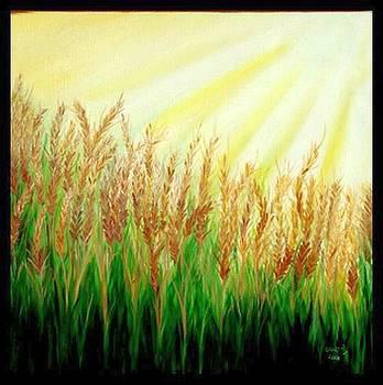 Wheat Field by Usha Rai