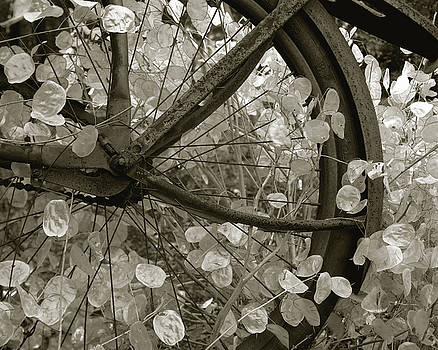 Wheel of Fortune by JK York
