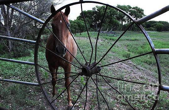 Wheel Of  Fortune by Natalie Ortiz