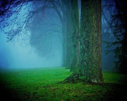 When the Fog Clears by Studio Yuki
