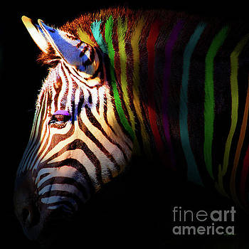 Wingsdomain Art and Photography - When Zebras Dream 7D8908 square