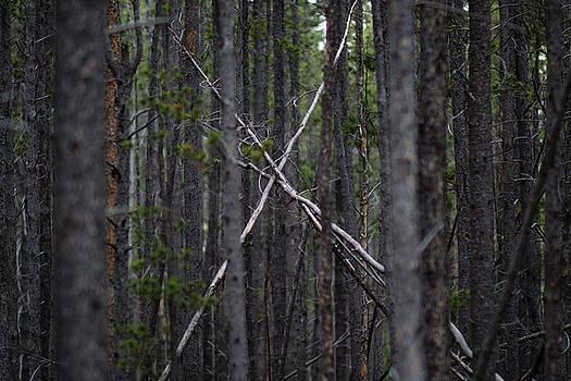 Where Bigfoot lives by Linda Storm