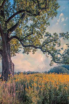 Where I Day Dream by John Rivera