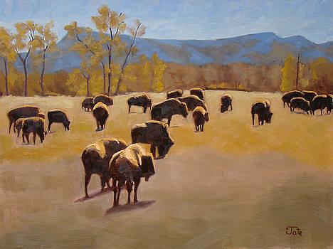 Where the buffalo roam by Tate Hamilton