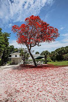 Scott Pellegrin - Where the Red Tree Grows