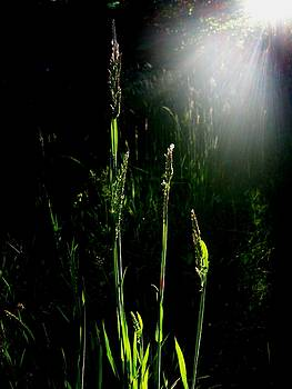 Where The Tall Grass Grows by Ken Day
