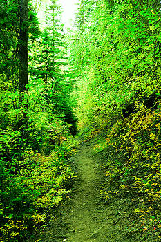 Where the trail goes by Jeff Swan