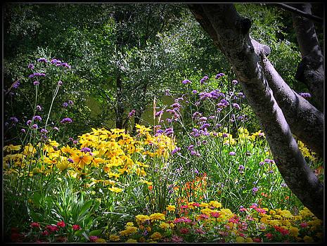 Where the Wild Flowers Grow by Trina Prenzi