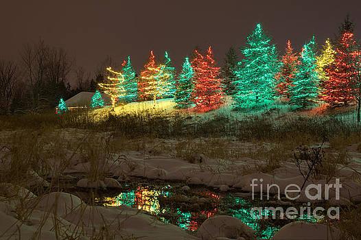 Whimsical Christmas Lights by Wayne Moran