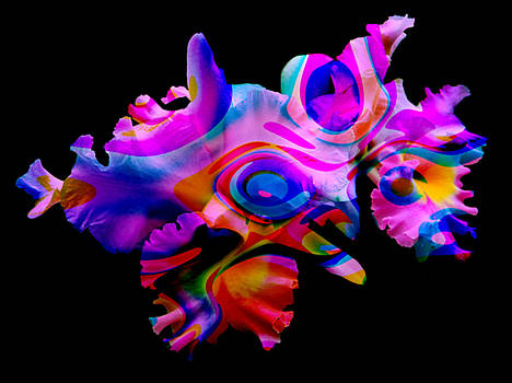 Whimsical by Ed Caravana