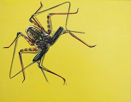 Whip Scorpion by Jude Labuszewski