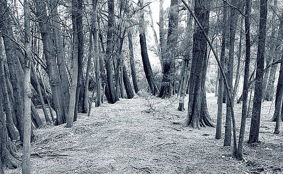 Whispering Forest by Wayne Sherriff
