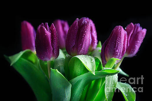 Whispering Tulips by Tracy Hall