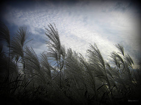 Whispers in the Wind by Trina Prenzi