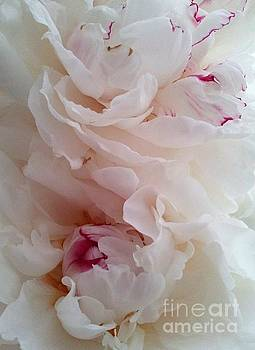 White and Red Peonies by Margaret Newcomb