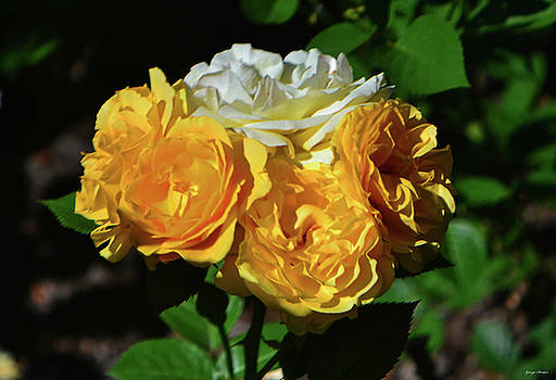 White And Yellow Rose Bouquet 001 by George Bostian
