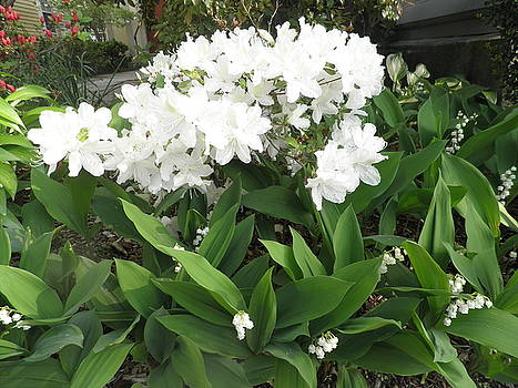 Kate Gallagher - White Azaleas and Lily of the Valley