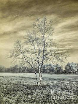 White Birch In Cantiague Park by Jeff Breiman