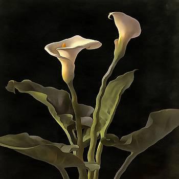 Tracey Harrington-Simpson - White Calla Lilies On A Black Background