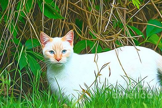 White cat by Andrew Michael