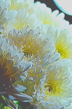Cindy Boyd - White Chrysanthemums in Spotlight