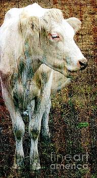 White Cow II by Sharon Marcella Marston