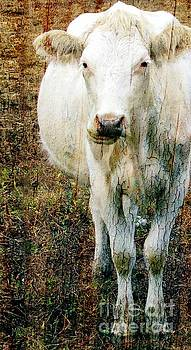 White Cow I by Sharon Marcella Marston