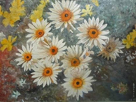 White daisies by Rashid Hamza