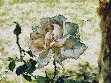 White discolored rose by Ashish Agarwal