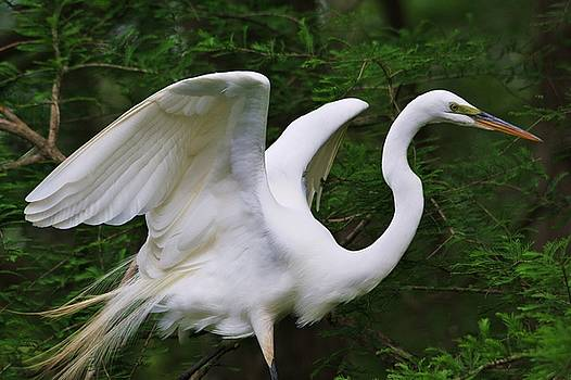 Paulette Thomas - White Egret