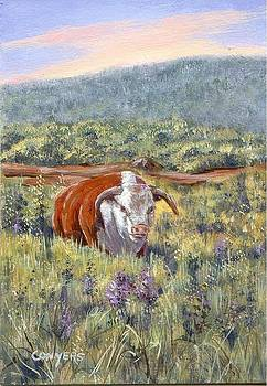 White Face Bull by Peggy Conyers