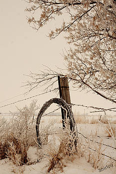 White fence by Shirley Heier
