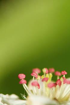 White flower by Jouko Mikkola