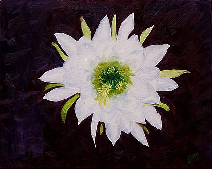 White Flower by Sylvia Riggs