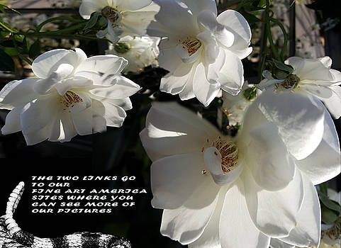 White Flowers by CD Ostenak