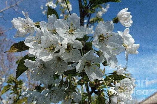 White Flowers - Variation 2 by Jean Bernard Roussilhe