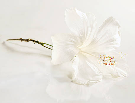White Hibiscus Flower by Monica and Michael Sweet