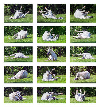 White Horse Montage by Brian Wallace