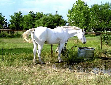 White Horse Named Ivanhoe by Ruth Housley