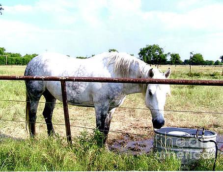 White Horse Named Smoke by Ruth Housley