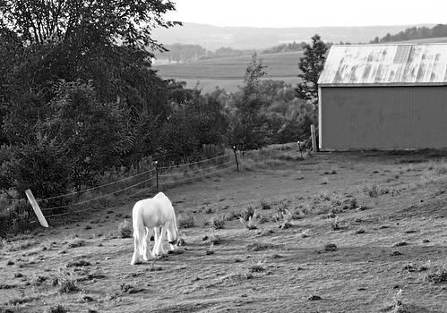 White Horse, New York by Brooke T Ryan