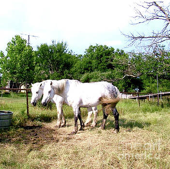 White Horses In Field  by Ruth Housley