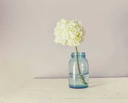 White Hydrangea by Kim Hojnacki