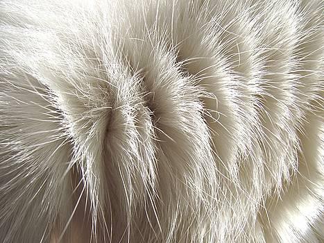 'White Kitty Fur' by Paula  Heffel